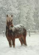Trigunian Pony