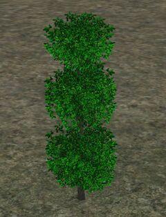 TopiaryPlant
