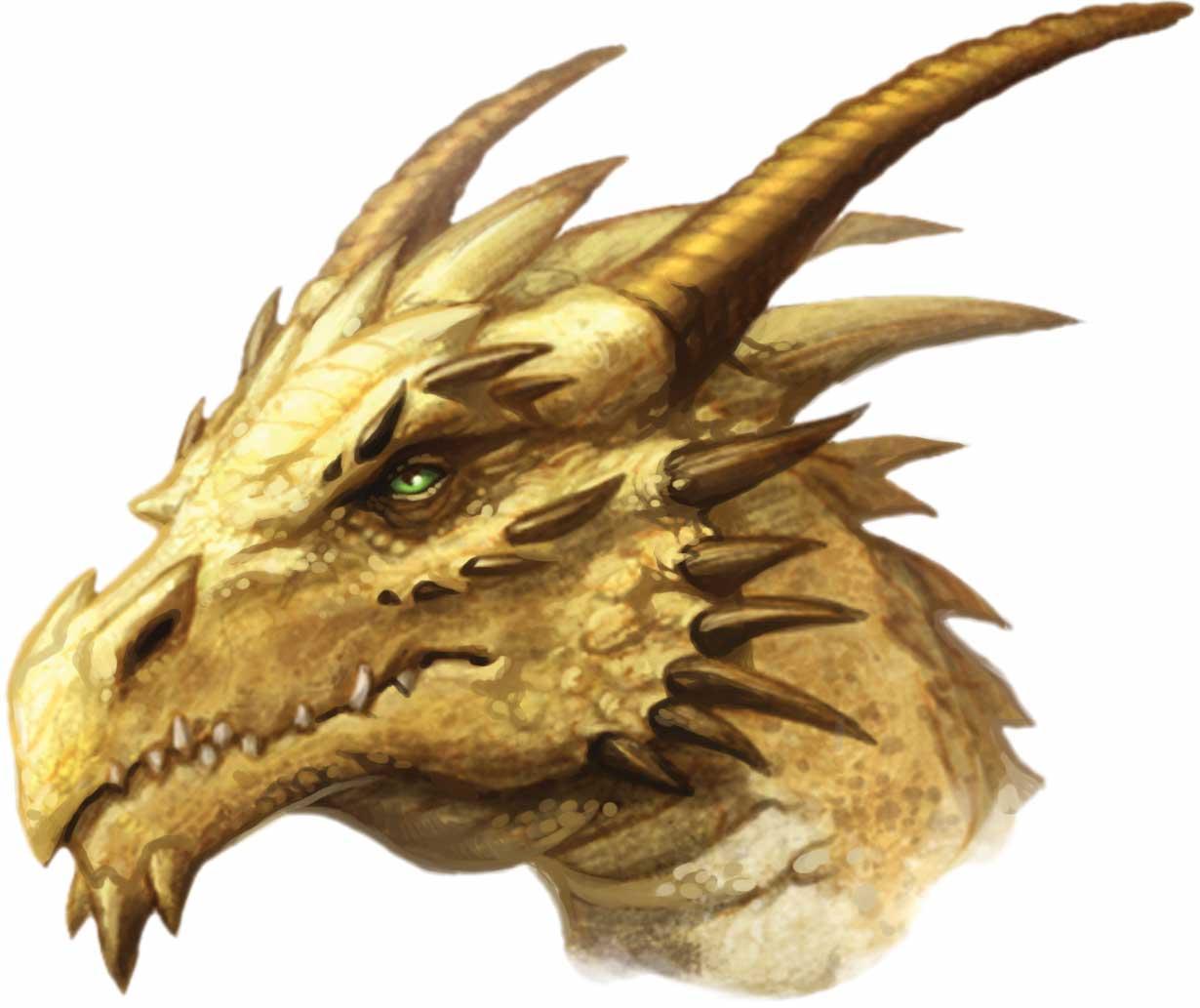 image gold dragon head jpg pathfinder wiki fandom powered by wikia