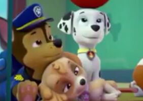 Skye-and-Chase-paw-patrol-40131038-440-310
