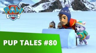 PAW Patrol Pup Tales 80 Rescue Episode! PAW Patrol Official & Friends