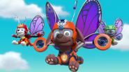 PST Butterflies 41