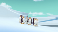 South Pole (with Penguins)