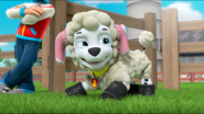 Sheep 40