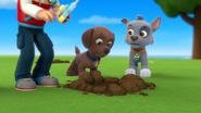 Where'd Robo-Dog Go