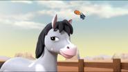 Pony 11
