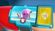 Baby Octopus 71
