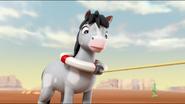 Pony 48