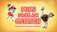 Pups Save an Ostrich (HQ)