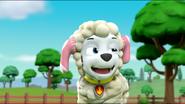 Sheep 28