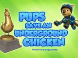 Pups Save an Underground Chicken