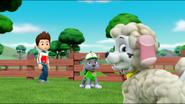 Sheep 27