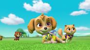 Pups Soccer 24