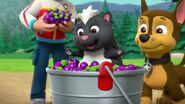 Paw-patrol-season-3-episode-20-pups-get-skunked-pups-and-a-whale-of-a-tale