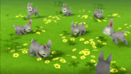 Bunnies (Bunnies)