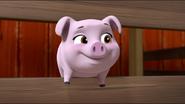Little Pigs 1