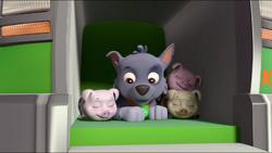 Little Pigs 54