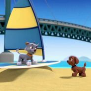 Rocky and Zuma at the beach