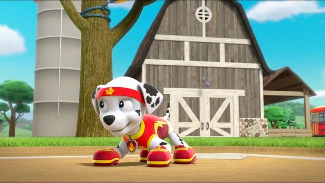 File:All Star Pups! 35.jpg