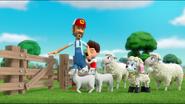Sheep 57