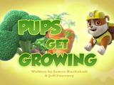 Pups Get Growing