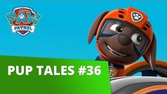 PAW Patrol Pup Tales 36 Rescue Episode