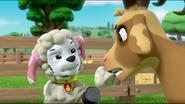 Sheep 44