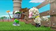 Sheep 43