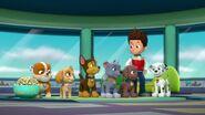 Paw.Patrol.S03E26E27.Parroting.Pups.Merpups.Save.the.Turbots.720p.WEB-DL.AAC2.0.H264-BTN 688897