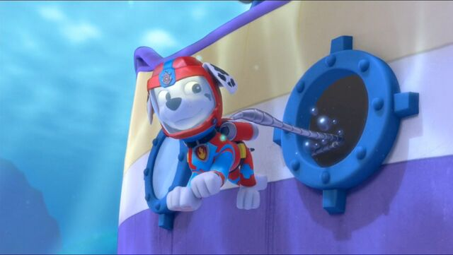 File:Baby Octopus 66.jpg