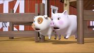 Little Pigs 11