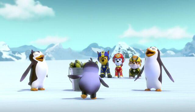 File:A Teeny Penguin 39.jpg