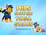 Pups Save the Yoga Goats
