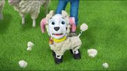 Sheep 59