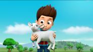 Sheep 38