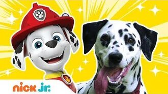 What Kind of Dogs & Birds Are The PAW Patrol & Top Wing Characters? Nick Jr.