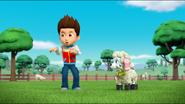 Sheep 29