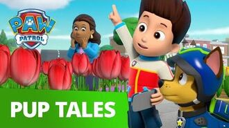 PAW Patrol Pups Save Mayor Goodway's Tulips Rescue Episode PAW Patrol Official & Friends!
