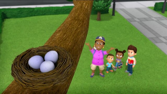 File:PAW Patrol Pups Save the Songbirds Scene 17.jpg