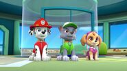 PAW.Patrol.S01E26.Pups.and.the.Pirate.Treasure.720p.WEBRip.x264.AAC 592158