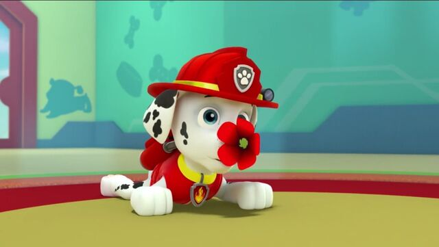 File:PAW Patrol Pups Save the Songbirds Scene 12.jpg