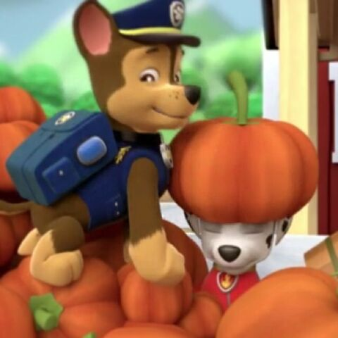 File:Chase and Marshall in the pumpkins.jpg