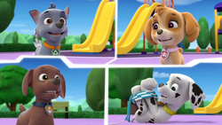 Kitty-tatshrope (Calling Pups)