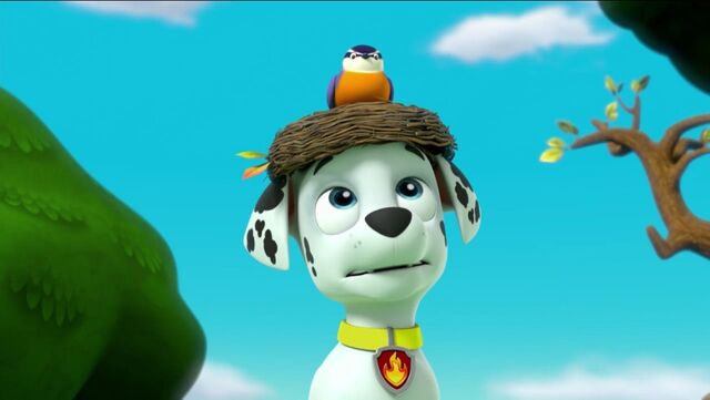 File:PAW Patrol Pups Save a Goldrush Scene 8.jpg