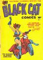 Black Cat -1.jpg