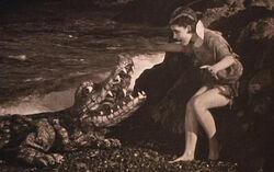 The-crocodile