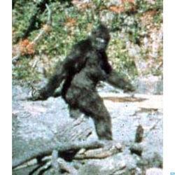 Bigfoot-live