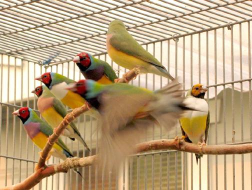 Birds 05b