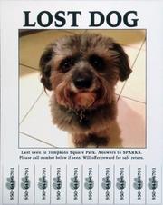 Lost Dog 950 641 6701