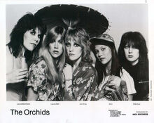 Orchids3-0